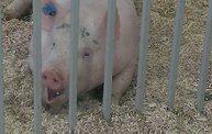 Wisconsin Valley Fair 2014 29