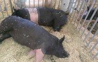 Wisconsin Valley Fair 2014 8