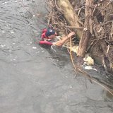 water rescue  pic provided by DNR