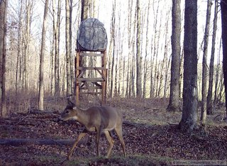 Deer in front of tree stand during hunting season.