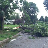 Trees fell on roadways all over Kalamazoo. They have since been cut up or lie intact on curb lawns.  (Photo by John McNeill)