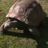 Tortoise (Photo from: FOX 11/YouTube)