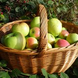 Apples in basket (By Oxfordian Kissuth (Own work) [CC-BY-SA-3.0 (http://creativecommons.org/licenses/by-sa/3.0)], via Wikimedia Commons)