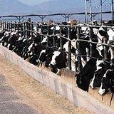 Dairy farm (from epa.gov)