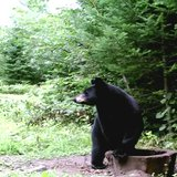 Bear in some woods in Wisconsin. (Photo from: FOX 11/YouTube).