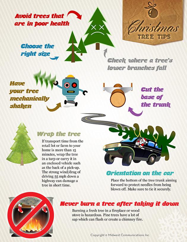 Make Your Fresh Christmas Tree Last Longer