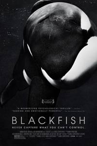 _Blackfish