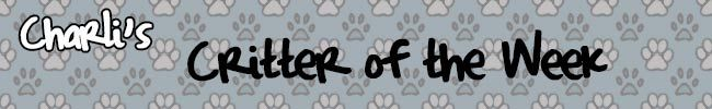 WNCY Charli's Critter of the Week Blog Header