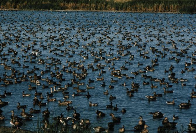 2015 north dakota waterfowl season the mighty 790 kfgo for South dakota non resident fishing license
