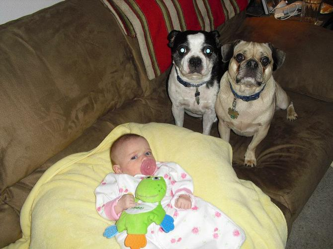 Then We Had Mia And The Dogs Loved To Be Near Her