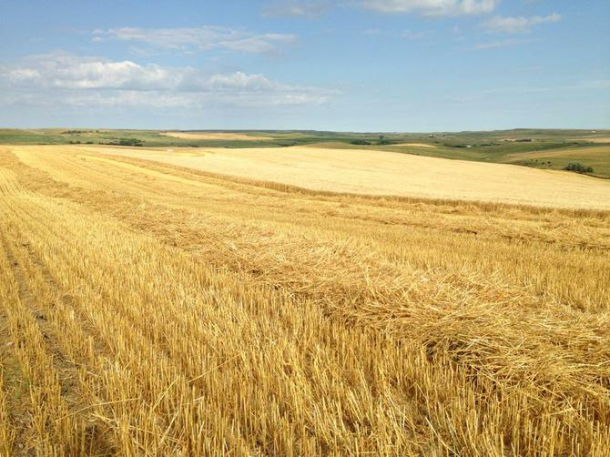 Companies Prepare for More Small Grain Acres in the Red