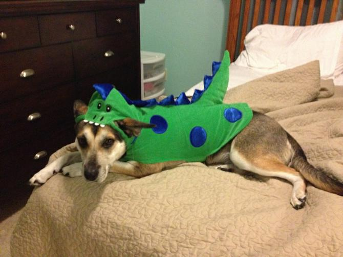 and melissa p emailed this picture of willow saurus rex