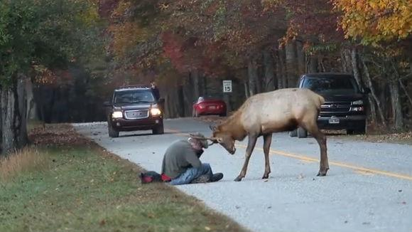 A Sad Ending To A True Story The Elk Featured In A Viral