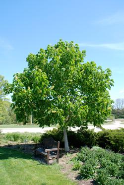 Drought Care for Trees | 101 WIXX